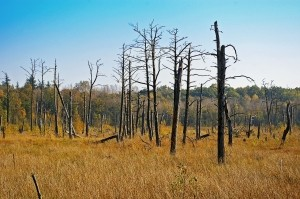Deutscher Wald Dürre