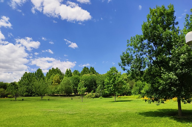 Kohlendioxid Vegetation