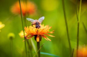 Bienen sind der Inbegriff von Nachhaltigkeit.
