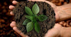 Nachhaltigkeit und Kultur – beide sind untrennbar. Foto: anncapictures via pixabay