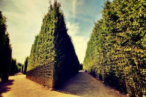 Ein Naturzaun ist ein toller Sichtschutz und ein erstklassiger Beitrag zu mehr Nachhaltigkeit. Foto sulagna via Twenty20